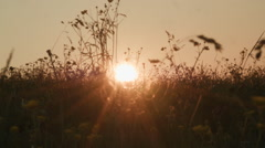 Beauty sunset, scenic field Stock Footage
