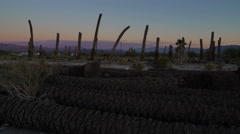 Time Lapse of Sunrise over Dead Palm Trees in Desert - stock footage