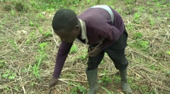FARMER WEEDING AND CHOPPING TWIGS WITH MACHETE - stock footage