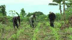 THREE PAKRO FARMERS CLEARING BRUSH Stock Footage