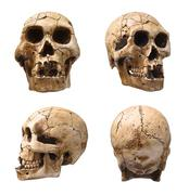 Collection of human skull isolated on white Stock Photos