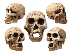 Collection of human skull isolated on white - stock photo