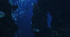 4K Shark in aquarium - stock footage