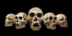 Collection of human skull isolated on black background Stock Photos