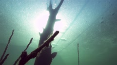 Oxygen bubbles rise to the underwater tree in frozen lake in slow motion Stock Footage