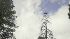 Camera dollies past tree with nest in it Stock Footage