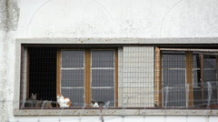 House window with many cats, pan right Stock Footage