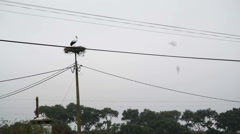 Lone stork bird in nest, power line telephone pole, Portugal Stock Footage
