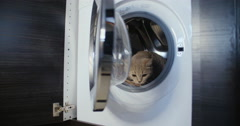 Cat jumps out of the washing machine Stock Footage