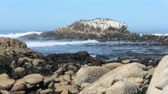 Flock of birds sitting on top of a rock by the sea Stock Footage