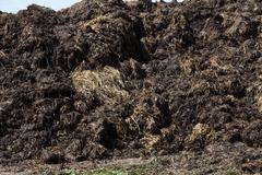 manure for fertilizer - stock photo