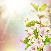 Blooming apple tree against the sky. EPS 10 - stock illustration