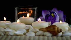 Spa Concept with Seashells and Waterlily Stock Footage