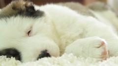 Shepherd puppy sleeping Stock Footage