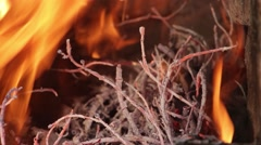 Dry branches of trees burning, high heat with red flames. Fire is seen almost Stock Footage
