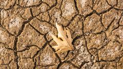Dry Leaf on cracked ground - stock photo