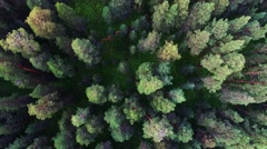 aerial view of  forest in Russia. Forest in center of Siberia - stock footage
