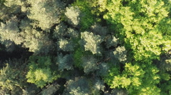 Green Forest. Fly camera from a height. Twisted views. - stock footage