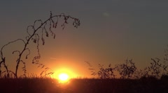 Sunrise and herbs, moves, battered by wind  - stock footage