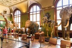 DSC People Visit The Museum of Natural History - stock photo