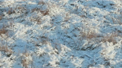 Dried flower under the snow. Clean and frosty daytime. Smooth dolly shot. Stock Footage