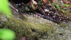 Spring up in the mountains, flowing over rocks. A source is groundwater  Stock Footage