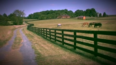 Horses in field - stock footage