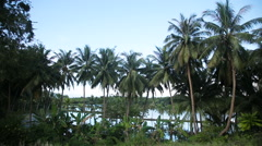 Coconut palm trees plantation in Philippines Stock Footage