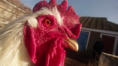 Rooster's head with red crest super close-up in the yard of the rural house Stock Footage