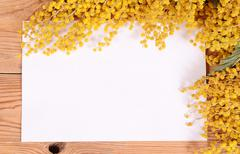 Yellow mimosa on wooden boards - stock photo