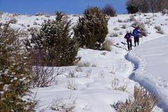 Snowshoe hikers ascend a hill Stock Photos
