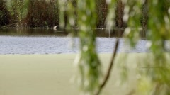 Green branches fluttering green water Stock Footage