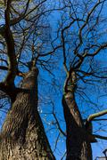 Late fall trees and blue sky - stock photo