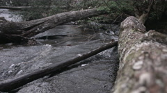 Tree log on a mountain stream during a bright summer day Stock Footage