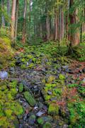 Rain Forest in Oregon Stock Photos