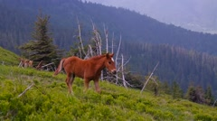 Little wild horse hillside Stock Footage