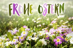 Flower meadow with german words frohe Ostern Stock Photos