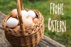 basket with bio eggs - stock photo
