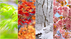 4 seasons nature collage. Several footage at different time of the year. - stock footage