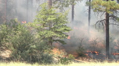 Stock Video Footage of Prescribed Burn Casualties