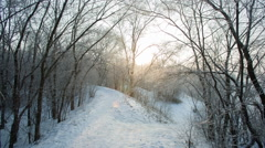 Beautiful Snowy Morning - stock footage