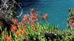 Coastline in Big Sur. Pacific Ocean waves against cliffs. Stock Footage