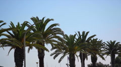 Palm trees in city, medium shot Stock Footage