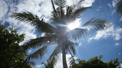 Coconut tree under blue sky and bright sun Stock Footage