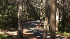 Car drives through Majestic Karri tree forest in South West Australia Stock Footage