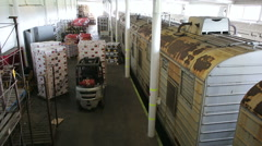 Truck carries boxes of fruit after unloading wagon train - stock footage