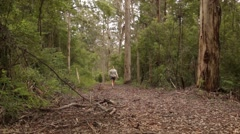 Girl walks through Majestic Karri tree forest in South West Australia Stock Footage