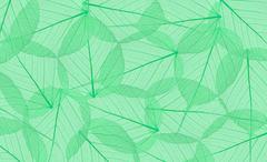 Decorative green skeleton leaves background Kuvituskuvat