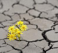 Lonely yellow flower growing on dried cracked soil - stock photo