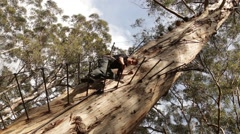 Boy climbs down a 75m high tree Stock Footage